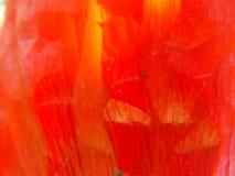 foglio 1 del papavero Immagini Stock
