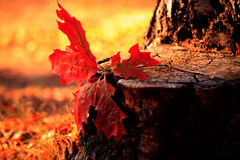 Foglio 2 di autunno Fotografia Stock Libera da Diritti