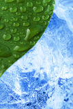 Foglio bagnato verde con ghiaccio fotografia stock libera da diritti