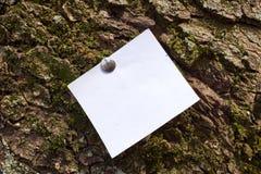 Foglio bianco dell'avviso di carta sticked alla corteccia dell'albero immagini stock