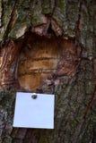 Foglio bianco dell'avviso di carta sticked alla corteccia dell'albero fotografia stock