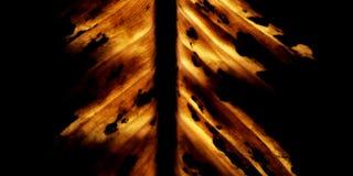 Foglio Burning Fotografia Stock