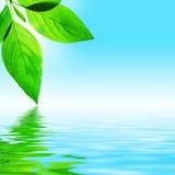 Foglio, cielo ed acqua immagine stock libera da diritti