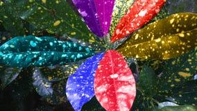 Foglio Colourful Fotografia Stock Libera da Diritti