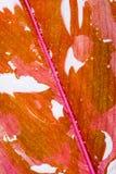Foglio con le goccioline della pioggia Fotografie Stock Libere da Diritti