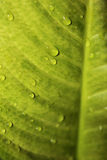 Foglio con le goccioline della pioggia Immagini Stock Libere da Diritti