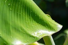Foglio con le goccioline della pioggia Immagine Stock