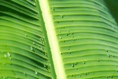 Foglio con le goccioline della pioggia Fotografia Stock Libera da Diritti