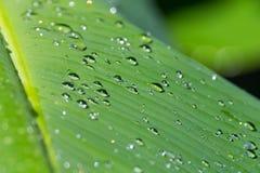 Foglio con le goccioline della pioggia Immagini Stock