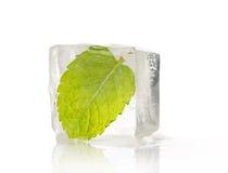 Foglio congelato fotografia stock