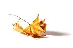 Foglio d'autunno fotografia stock