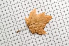 foglio d'autunno Fotografie Stock