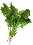 Foglio degli spinaci Immagine Stock