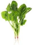 Foglio degli spinaci Fotografie Stock