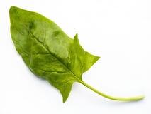 Foglio degli spinaci Immagini Stock