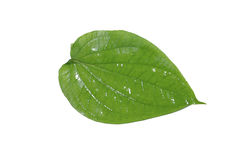 Foglio del betel Immagini Stock