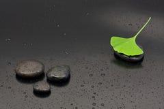 Foglio del Ginkgo fotografia stock