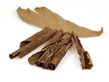 Foglio del tabacco Fotografie Stock