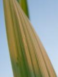 Foglio dell'erba Fotografia Stock Libera da Diritti
