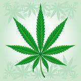 Foglio della canapa/marijuana/canapa dettagliato illustrazione vettoriale