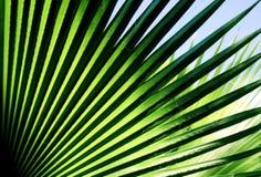 Foglio della palma fotografie stock