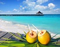 Foglio della palma del cocktail delle noci di cocco nei Caraibi Fotografia Stock