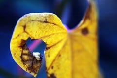 Foglio della pianta rampicante Fotografia Stock Libera da Diritti
