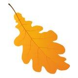 Foglio della quercia di autunno Fotografia Stock Libera da Diritti