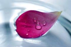 Foglio della Rosa su acqua Fotografia Stock Libera da Diritti