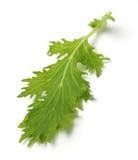 Foglio delle insalate verdi Fotografie Stock