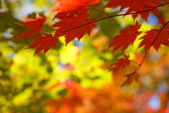 Foglio di autunno fotografia stock libera da diritti