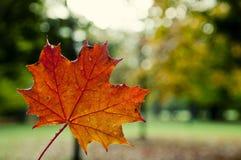 Foglio di autunno fotografia stock