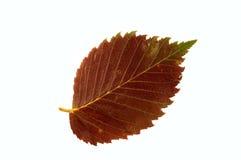 Foglio di autunno? Fotografie Stock
