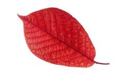 Foglio di autunno? Immagini Stock