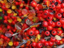 Foglio di autunno Immagine Stock