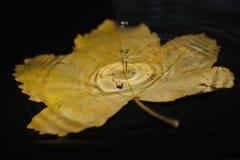 Foglio di autunno immagini stock