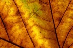 Foglio di autunno Immagine Stock Libera da Diritti