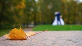 Foglio di autunno stock footage