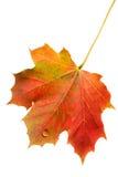 Foglio di autunno con goccia dell'acqua Fotografia Stock