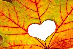 Foglio di autunno con un foro nella figura di cuore Fotografie Stock Libere da Diritti
