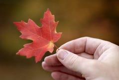 Foglio di autunno della holding Fotografia Stock Libera da Diritti
