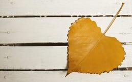 foglio di autunno di Cuore-figura Fotografia Stock