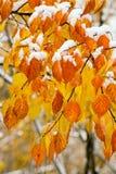 Foglio di autunno in neve Fotografia Stock Libera da Diritti
