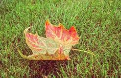 Foglio di autunno su erba verde Fotografia Stock Libera da Diritti