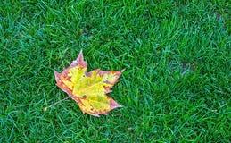Foglio di autunno su erba verde Fotografia Stock