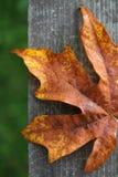 Foglio di autunno su legno Fotografia Stock Libera da Diritti