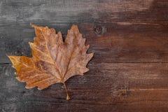 Foglio di autunno su una priorità bassa di legno Fotografie Stock