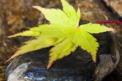 Foglio di autunno sulla pietra Immagini Stock Libere da Diritti