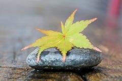 Foglio di autunno sulla pietra Fotografia Stock