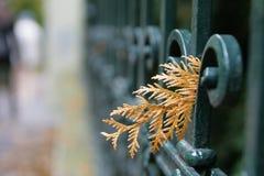 Foglio di autunno sulla rete fissa fotografie stock libere da diritti